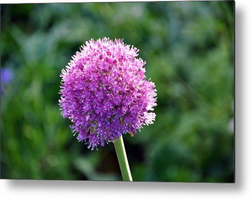 Flower Metal Print featuring the photograph Pink Flower Ball by Joe K --