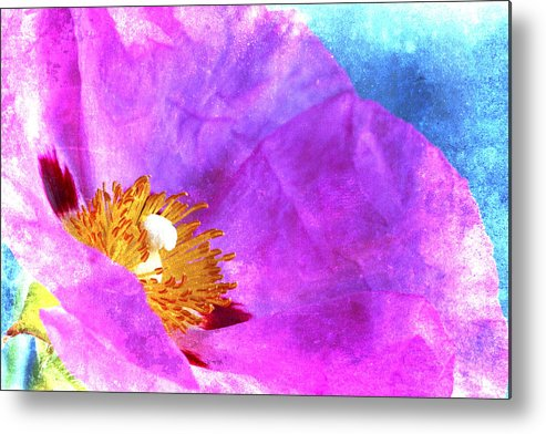 Rose Metal Print featuring the photograph Pink Rock Rose On Blue by Carol Leigh
