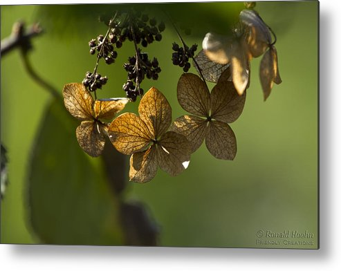 Dried Flowers Metal Print featuring the photograph Pinwheels by Ronald Hoehn