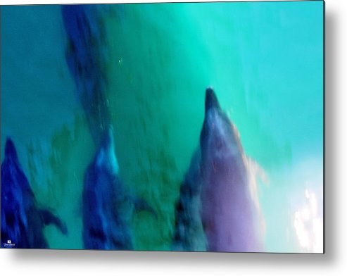 Sea Of Cortez Metal Print featuring the photograph Pod Of Dolphins by Russ Harris