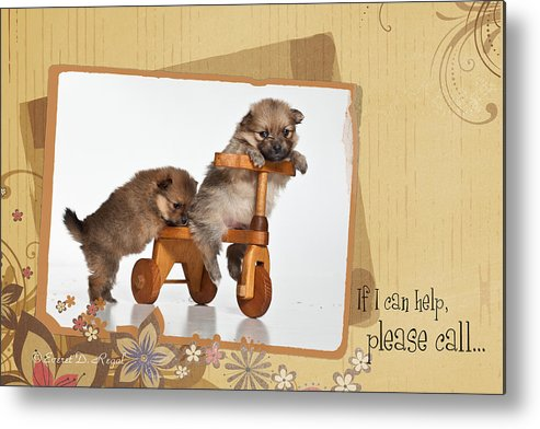 Puppies Metal Print featuring the photograph Pomeranian 1 by Everet Regal