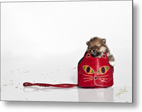 Puppies Metal Print featuring the photograph Pomeranian 2 by Everet Regal