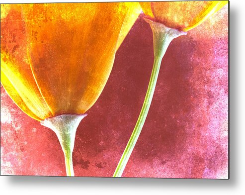 Poppies Metal Print featuring the photograph Poppies On Red by Carol Leigh