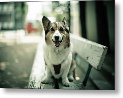 Horizontal Metal Print featuring the photograph Portrait Of Dog by Moaan