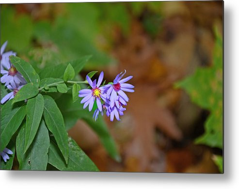 Purple Metal Print featuring the photograph Purple Flower by Autumn Wade