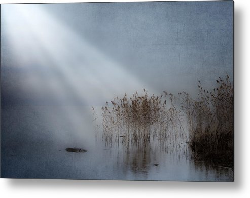 Reeds Metal Print featuring the photograph Rays Of Light by Joana Kruse