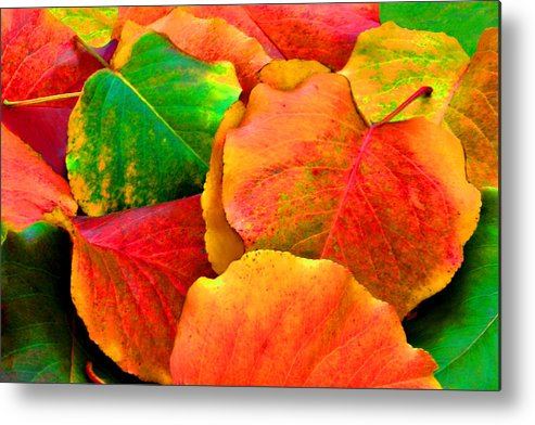 Colorful Metal Print featuring the photograph Really Colorful Fall Leaves by Sheila Kay McIntyre