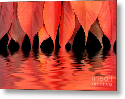Flames Metal Print featuring the photograph Red Autumn Leaves In Water by Simon Bratt Photography LRPS