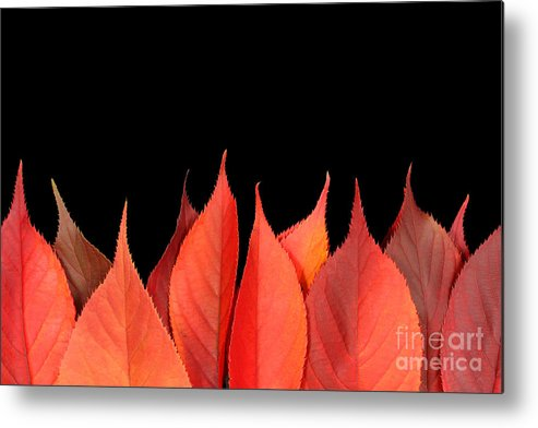 Flames Metal Print featuring the photograph Red Autumn Leaves On Edge by Simon Bratt Photography LRPS