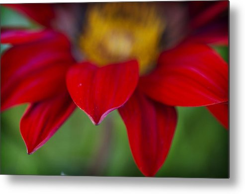 Red Metal Print featuring the photograph Red Gerber 3 by Jessica Velasco