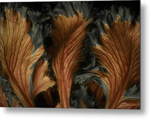 Red Metal Print featuring the photograph Red Lettuce by Ralph Fahringer