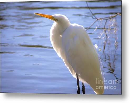 Egret Metal Print featuring the photograph Relaxing by Lynda Dawson-Youngclaus