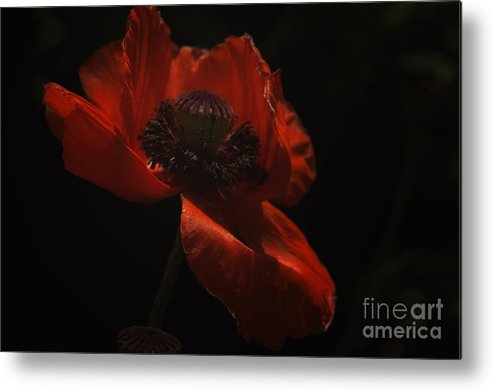 Poppy Metal Print featuring the photograph Remember by Diane Smith