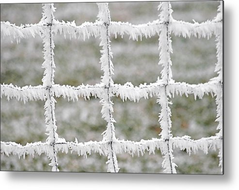 Frost Metal Print featuring the photograph Rime Covered Fence by Christine Till