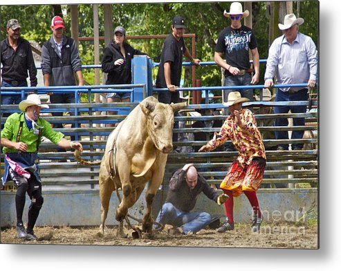 Photography Metal Print featuring the photograph Rodeo Clowns To The Rescue by Sean Griffin