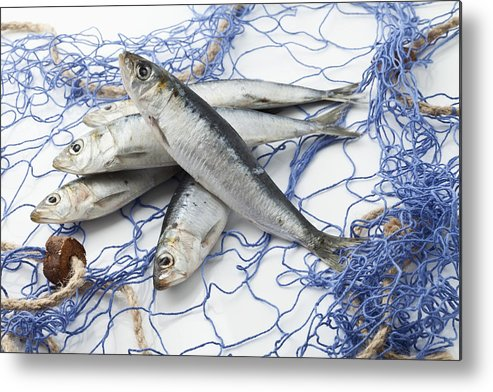 Horizontal Metal Print featuring the photograph Sardines With Fishnet On White Background by Westend61