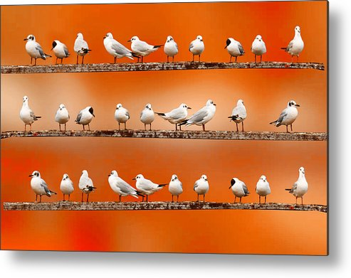 Horizontal Metal Print featuring the photograph Seagul Surprise by Spangles44 flickr