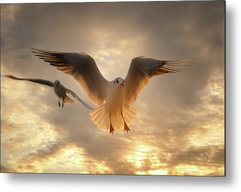 Horizontal Metal Print featuring the photograph Seagull by GilG Photographie