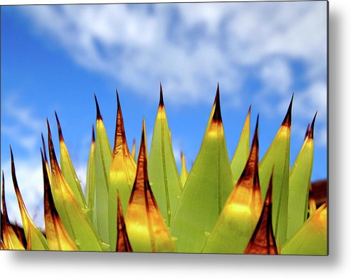 Horizontal Metal Print featuring the photograph Side View Of Cactus On Blue Sky by Greg Adams Photography