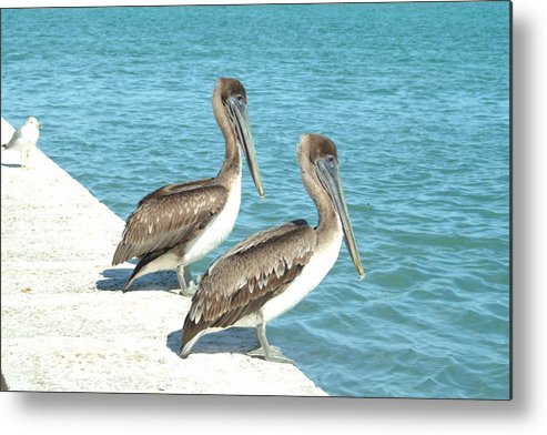 Pelicans Metal Print featuring the photograph Sneak Peek by Tammy More