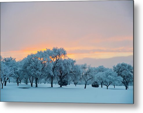 Horizontal Metal Print featuring the photograph Snow Covered Trees At Sunset by Nancy Newell
