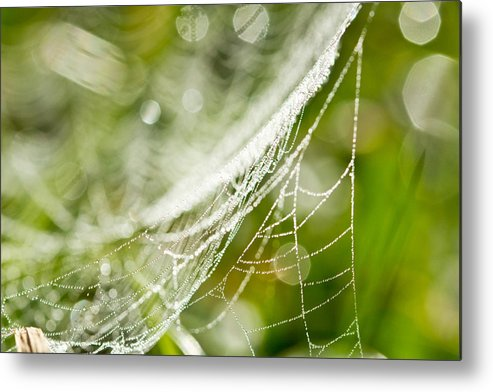 Horizontal Metal Print featuring the photograph Sparkling Web by © copyright 2011 Sharleen Chao