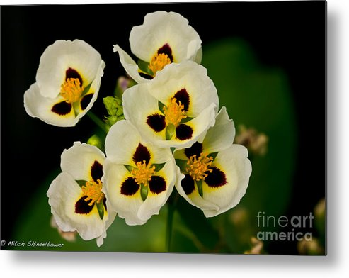 Flower Metal Print featuring the photograph Spring Color by Mitch Shindelbower