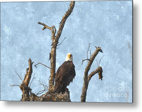 Bald Eagle Metal Print featuring the photograph Standing Guard by Bill Willemsen