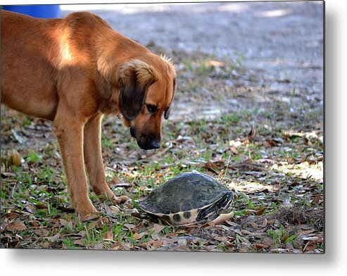Metal Print featuring the photograph Stare Down by Katrina Johns