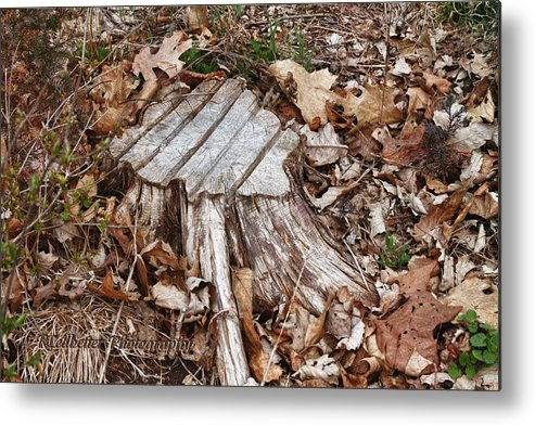 Trees Metal Print featuring the photograph Stumped by Renee Ledbetter