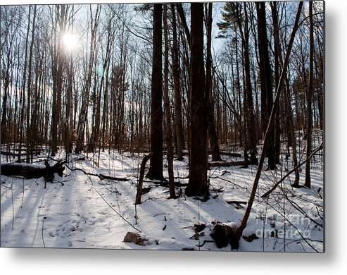 Long Sault Metal Print featuring the photograph Sun On The Wild Turkey Trail by Gary Chapple