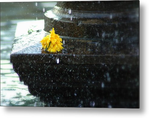 Flower Metal Print featuring the photograph Tears On Cempasuchil by Fabio Lorenzano