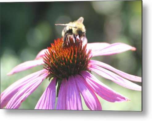 Cone Flower Metal Print featuring the photograph Territorial by Barbara S Nickerson