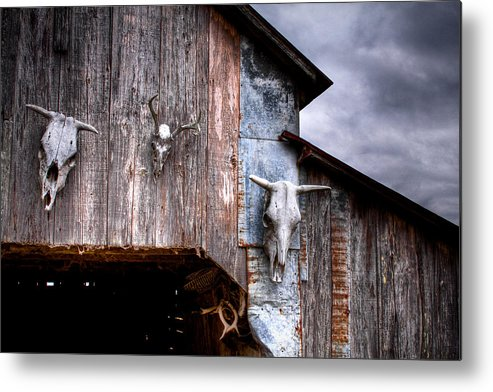 Cow Metal Print featuring the photograph The Broad Side Of A... by Pixel Perfect by Michael Moore
