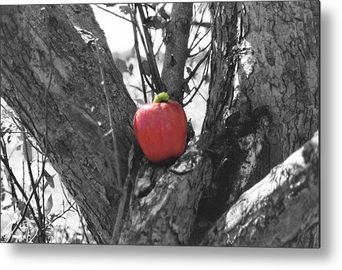 Uptown Arts Metal Print featuring the photograph The Early Worm Gets The Apple by Paul Louis Mosley