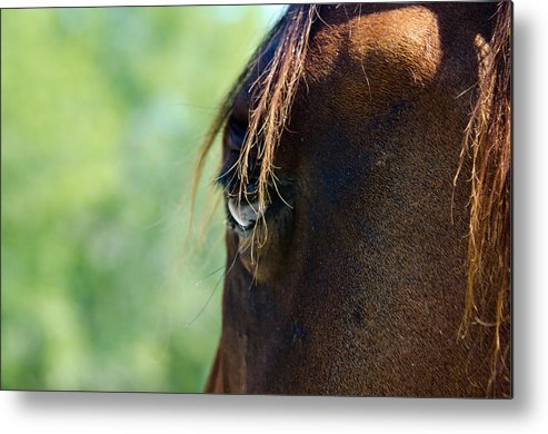 Horse Metal Print featuring the photograph The Gaze by Lisa Moore