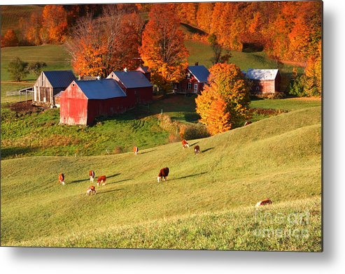 the Jenne Farm Metal Print featuring the photograph The Jenne Farm by Butch Lombardi