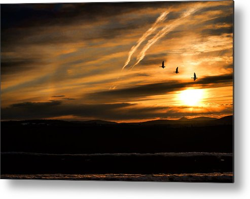 Geese Metal Print featuring the photograph The Last Sunset by Gary Smith
