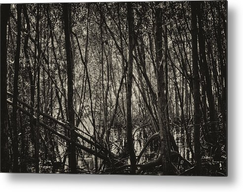 Mangrove Forest Metal Print featuring the photograph The Mangrove by Armando Perez