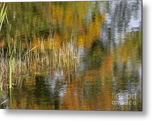 Photography Metal Print featuring the photograph The Pond Shallows by Sean Griffin
