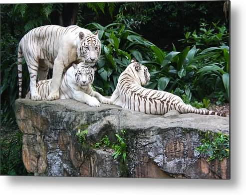 Singapore Metal Print featuring the photograph Threesome by Paula St James