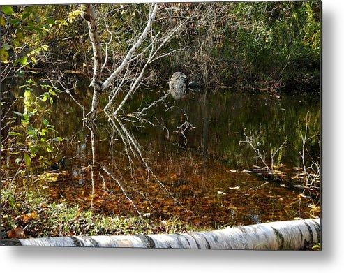 Usa Metal Print featuring the photograph Tree Reflections Stoney Creek by LeeAnn McLaneGoetz McLaneGoetzStudioLLCcom