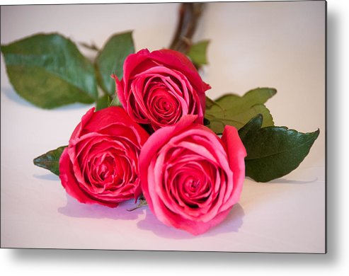 Pink Metal Print featuring the photograph Trio Of Pink Roses by John White