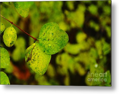 Leaves Metal Print featuring the photograph Two Of A Kind by Jeff Swan