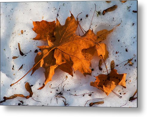 Nature Metal Print featuring the photograph Two Seasons by Michael Friedman