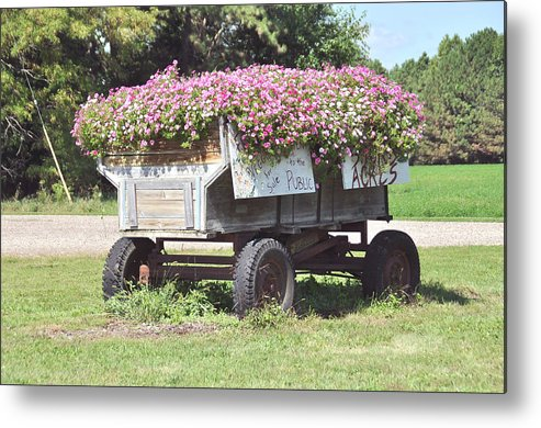 Flowers Metal Print featuring the photograph Unique Flower Pot by Robert Comstock
