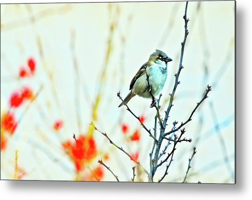Adorable Metal Print featuring the photograph Valentine Sparrow by Artistic Photos