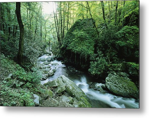 North America Metal Print featuring the photograph View Of Roaring Fork Creek by George F. Mobley