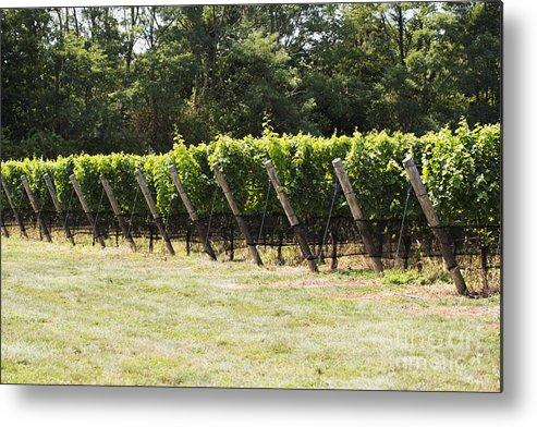 Vineyard Metal Print featuring the photograph Vineyards by Leslie Leda
