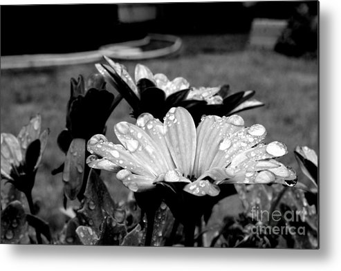 Flowers Metal Print featuring the photograph Water Drops On Flowers by NW Images